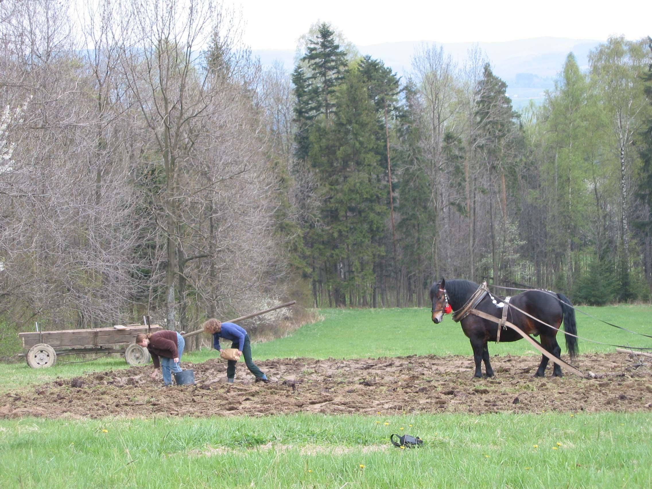 Horse farming 12221738064
