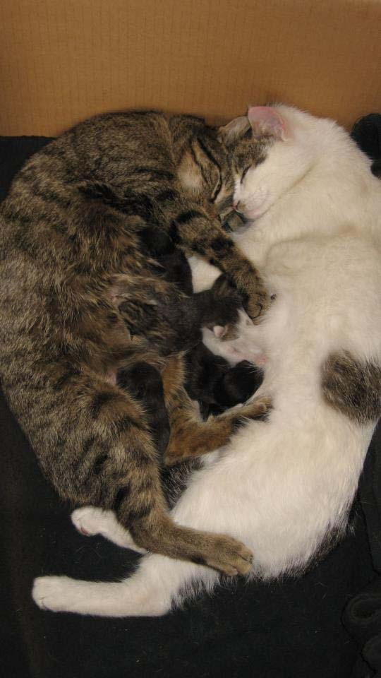 Nanda, Sweetpea & their babies 12220511665