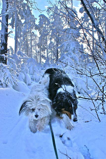 Our snow dogs! 12221107116