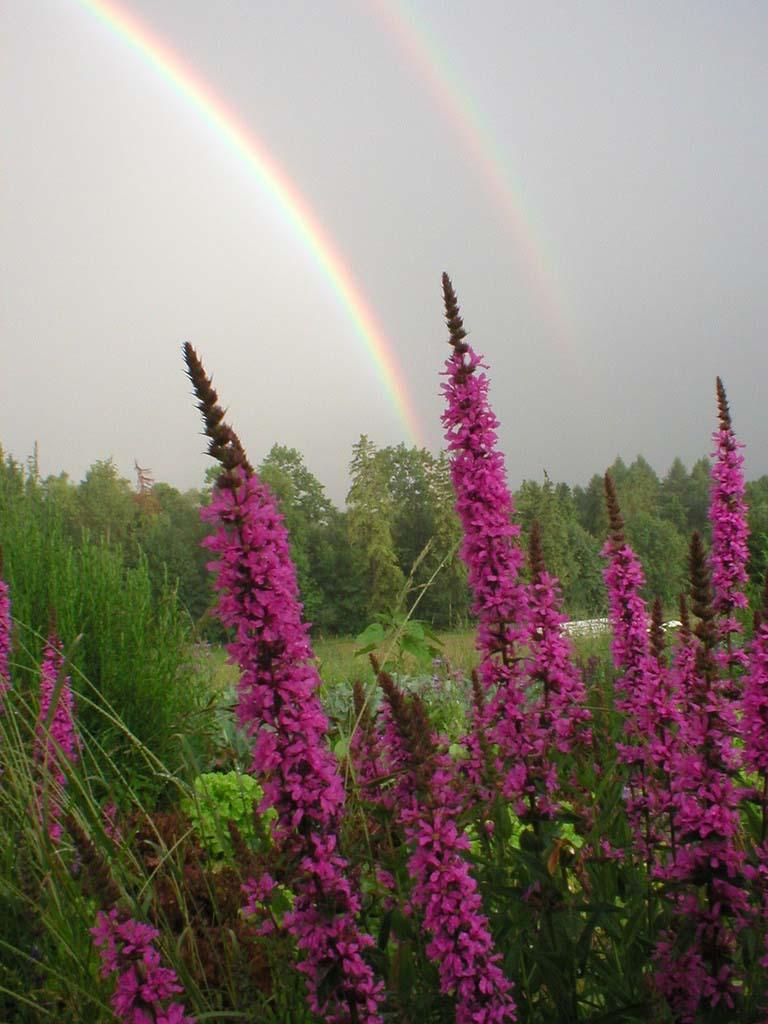 Rainbow flowers_12221857463_l